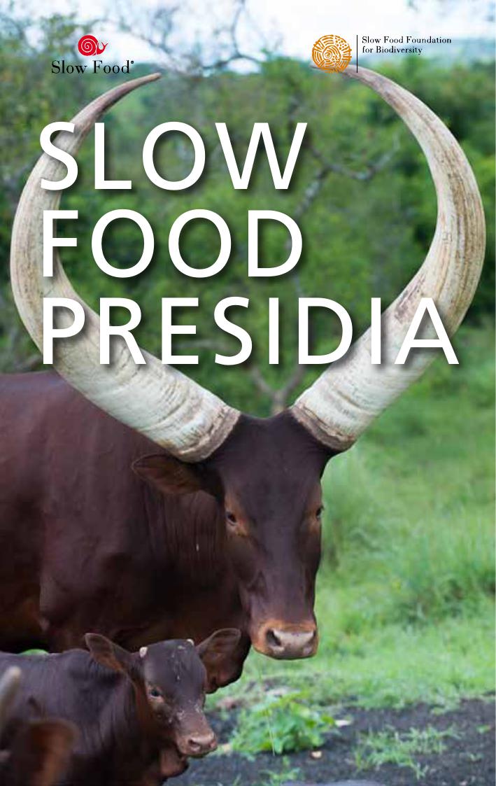 D Antoni Rattan A Castelvetrano.Slow Food Presidia 2015 Manualzz